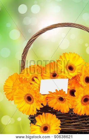 Gerber flowers in the wicker
