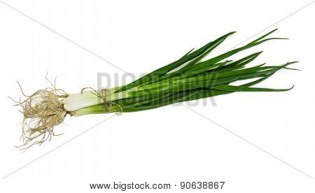 Bundle Of Green Onion
