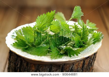 Fresh Nettle In White Plate On Wooden Background