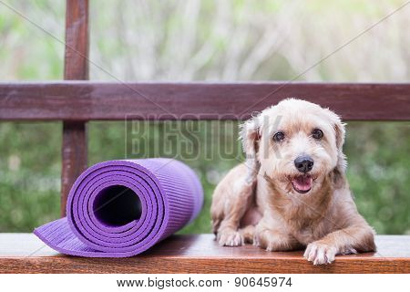 Dog Lies Down Beside Yoga Mat