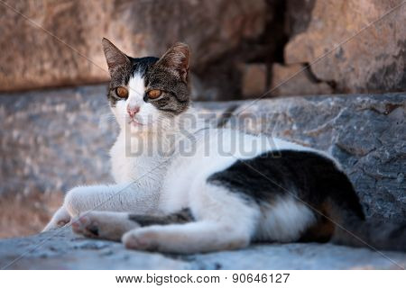 Alerted Cat