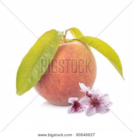 Peach With Leaves And Flowers Isolated On White