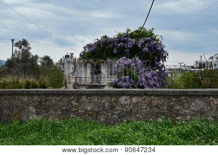 Purple Flowers Abandoned House