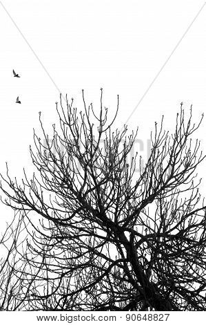 Fig Tree Flying Birds