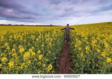 Rape Field Landscape With Man Silhouette