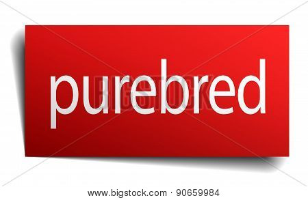 Purebred Red Paper Sign On White Background