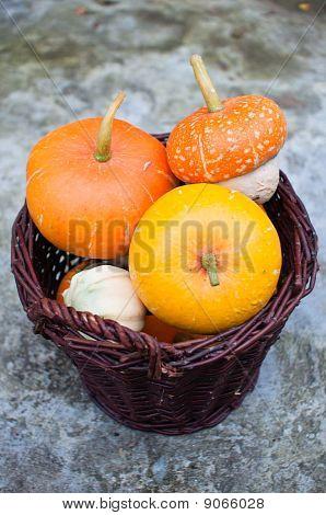 Wicker Basket Full Of Decorative Pumpkins (cucurbita Pepo)