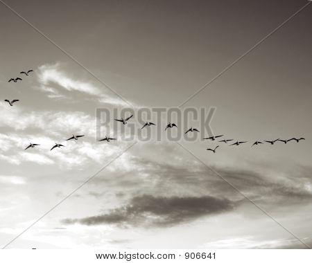 Flying4