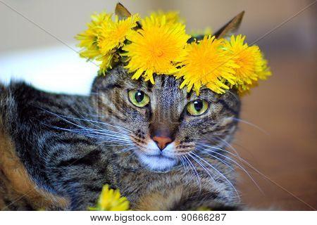 cat in flower crown