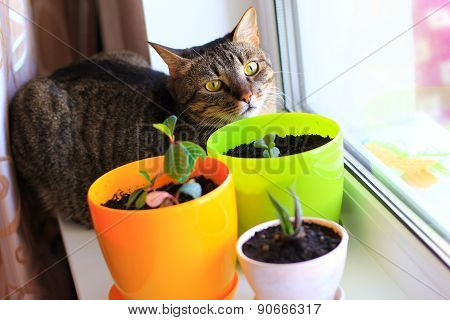 cat and houseplants
