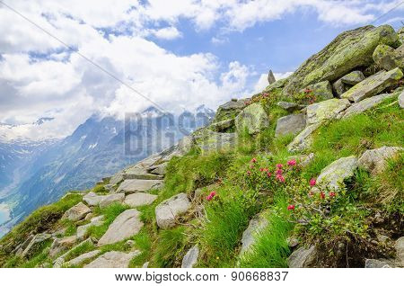 Alpine landscape with mountain flowers, Austria