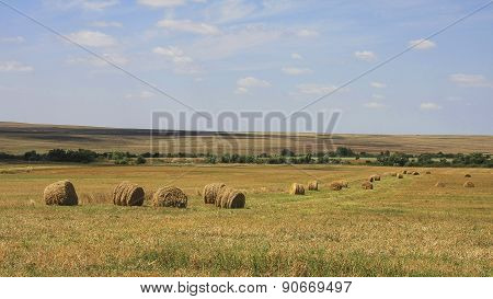Hay Rolls On Agricultural Field