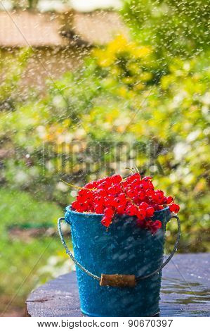 Red Currant Fruit Bucket Summer Rain Drops Water Wooden