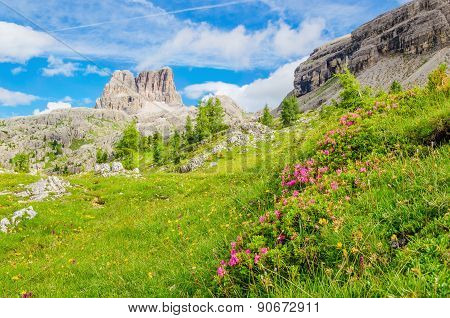 Mountain flowers and pine, Dolomites Mountains