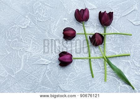 Beautiful violet tulips on gray background