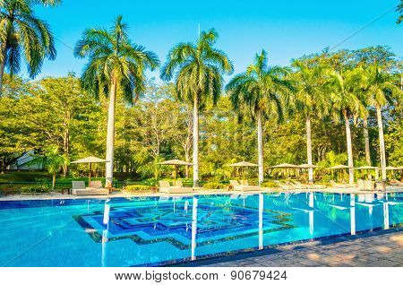 Sunbeds and high palm trees at swimming pool