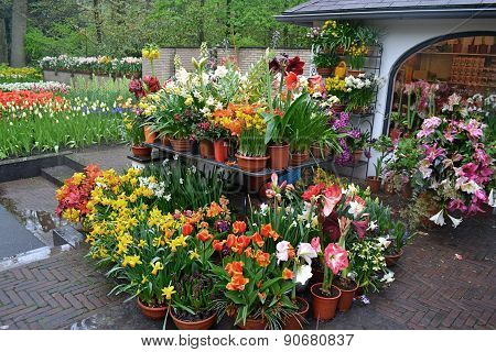Green house shop with potted flowers