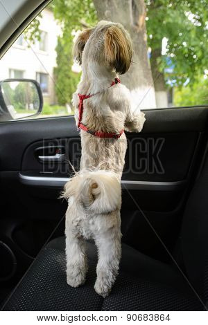 Small Dog Wait For In Car