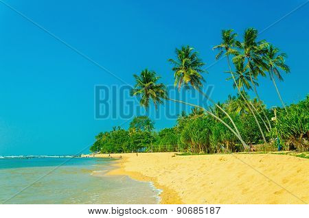 Exotic sandy beach with high palm trees