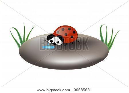 Sad ladybug on a stone, isolated