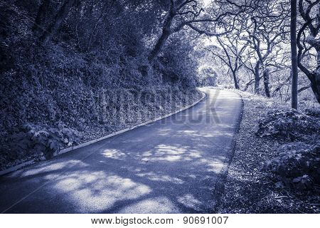 blue monochrome of a country road in the forest - Sintra, Lisboa