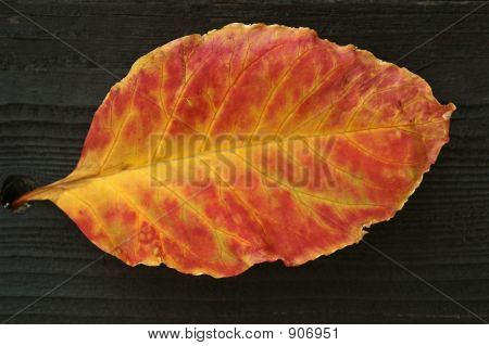 Autumn Leaf On Dark Wood