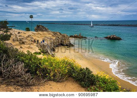 Yellow Flowers And View Of A Beach In Corona Del Mar, California.