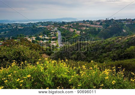 Yellow Flowers And View Of Houses In The Hills Of La Jolla, From Mount Soledad, In La Jolla, Califor