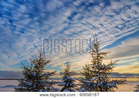 Evergreen trees silhouetted by a dramatic cloud formation at sunset.