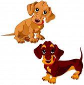 foto of dachshund  - Illustration of a two cute dachshunds  - JPG