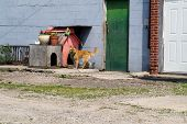 picture of dog poop  - A chained guard dog on duty, the roof of his doghouse decorated with flower pots