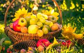 stock photo of orchard  - Autumn in the orchard - JPG
