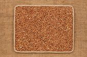 foto of buckwheat  - Frame made of rope with buckwheat grains on sackcloth as background texture - JPG