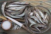 foto of caught  - Freshly caught small fish - JPG