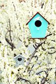 foto of nesting box  - Decorative nesting boxes on bright background - JPG