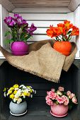 picture of crate  - Beautiful flowers in pots in wooden crate - JPG