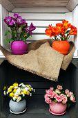 foto of wooden crate  - Beautiful flowers in pots in wooden crate - JPG