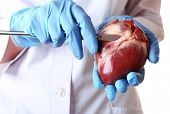 stock photo of scalpel  - Doctor holding heart organ and scalpel close up - JPG