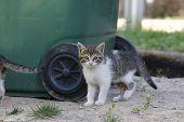 stock photo of baby cat  - Kitten - JPG