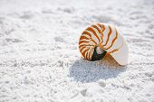 foto of under sea  - nautilus shell with sea wave - JPG