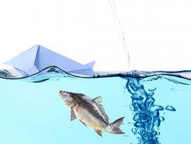 stock photo of fresh water fish  - Origami fish and fresh fish in water - JPG