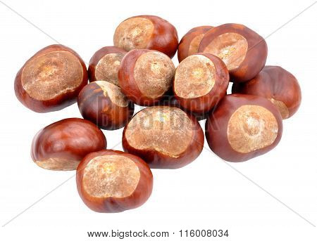Horse Chestnut Tree Conkers