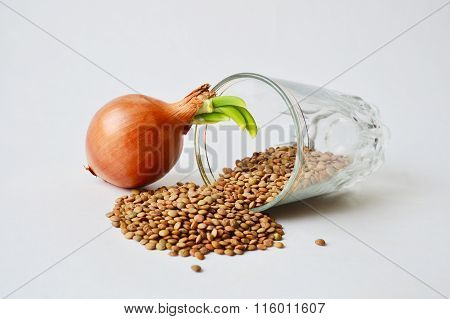 Sprout and a glass with half-spilled lentils