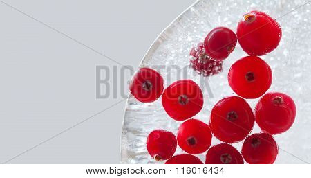 Natural forest cranberry frozen in piece of ice. Cranberries berries macro view. copy space, gray ba