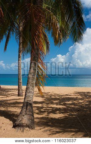 Beach Of Grande Anse, Deshaies, Guadeloupe