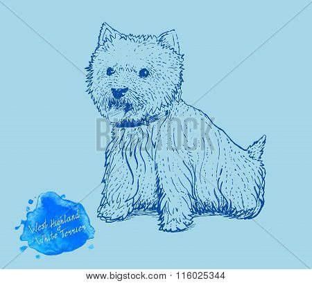 dog on a blue background