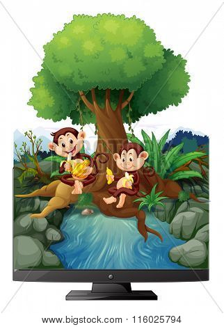 Two monkeys eating banana by the river illustration