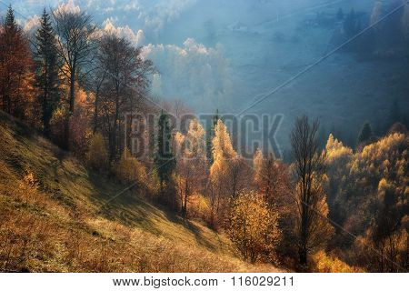 Foggy And Sunny Day Of A Autumn, On Wild Transylvania Hills. Holbav. Romania. Low Key, Dark Backgrou