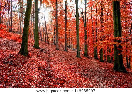 Trees With Red Autumn Leafs In Sonian Forest