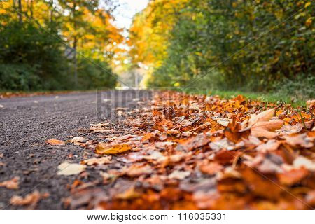 Autumn Leaves By The Road